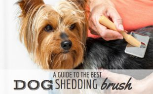 Best Dog Shedding Brush