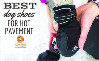 Closeup of dog paw wearing booties (Caption: Best Dog Shoes for Hot Pavement)