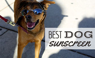 Dog with sunglasses sitting outside (caption: Best Dog Sunscreen)