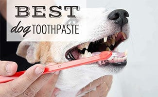 Dog getting teeth brushed (Caption: Best Dog Toothpaste)