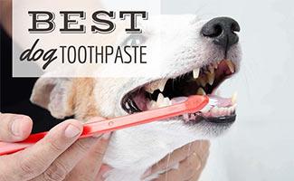 Dog getting teeth brushed (Caption: Best Dog Toothpaste)