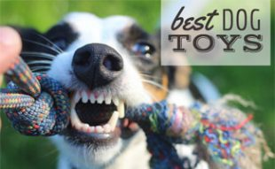 Dog chewing on toy: What Are The Best Dog Toys?