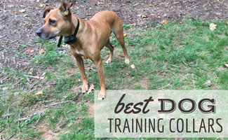 Dog with training collar: Best Dog Training Collars