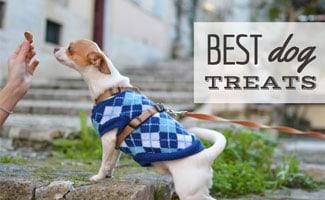 Dog eating treat (caption: Best Dog Treats)
