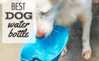 Dog drinking out of a water bowl (caption: Best Dog Water Bottle)