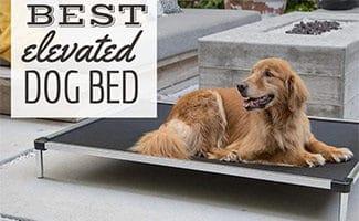 Dog sitting outside on elevated bed (caption: Best Elevated Dog Bed)