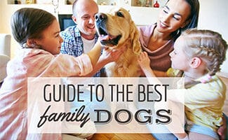 Family petting Golden dog (Caption: Guide To The Best Family Dogs)