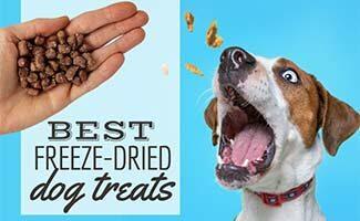 Hand with freeze-dried treats and dog eating them (caption: Best Freeze Dried Dog Treats)