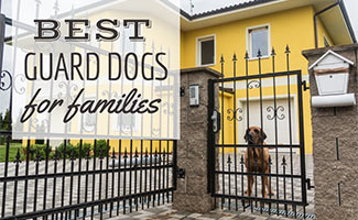 Dog standing at house gate (caption: Best Guard Dogs For Families)