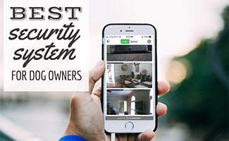 Man holding smart phone with security camera footage on screen (caption: Best Home Security System For Pet Owners)