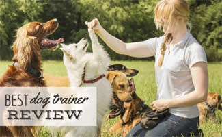 Dog trainer with dogs: Doggy Dan's Online Dog Trainer Review