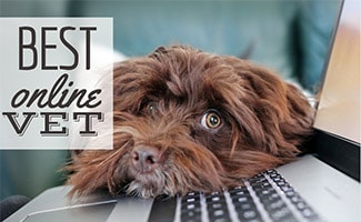 Dog laying on computer (caption: Best Online Vet)