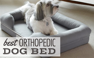 Dog laying in orthopedic bed (caption: Best Orthopedic Dog Bed