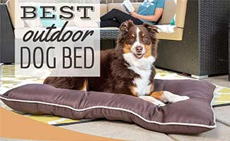 Dog laying on bed on patio (Caption: Best Outdoor Dog Beds)