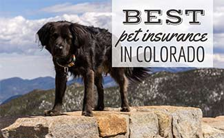 Dog hiking in mountains (caption: Best Pet Insurance In Colorado)