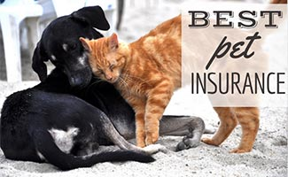 Dog and cat rubbing against each other (caption: Best Pet Insurance)