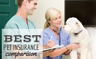 Best Pet Insurance Comparison