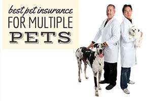 Two dogs with two vets (caption: Best Pet Insurance For Multiple Pets)