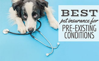 Dog lying next to stethoscope (Caption: Best Pet Insurance For Pre-Existing Conditions)