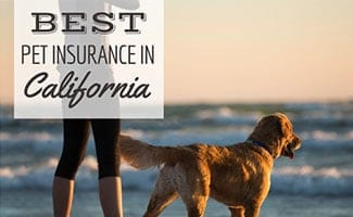 Person and dog standing on beach with sunset (caption: Best Pet Insurance In California)