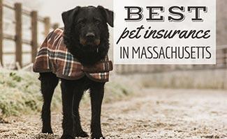 Black dog in jacket on road (caption: Best Pet Insurance In Massachusetts)
