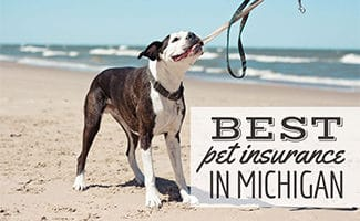 Dog at lake Michigan (caption: Best Pet Insurance In Michigan)