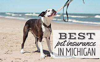 Dog at Lake Michigan beach (caption: Best Pet Insurance In Michigan)