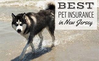 Dog on beach in NJ (caption: Best Pet Insurance In New Jersey)