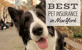 Dog on street in New York City (caption: Best Pet Insurance In New York)