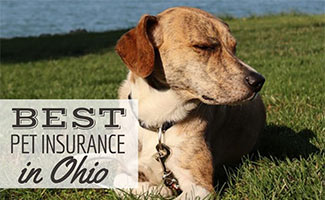 Dog laying in the grass next to water (caption: Best Pet Insurance In Ohio)