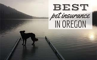 Dog at lake with sunset (caption: Best Pet Insurance In Oregon)