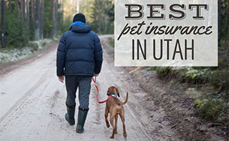 Man walking dog on hiking trail (Caption: Best Pet Insurance In Utah)