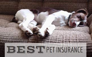 Best Pet Insurance and dog lying on sofa