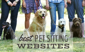 People standing with dogs (caption: best Sitting Websites)
