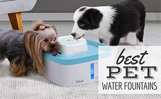 Dog and cat drinking out of a water fountain (caption: Best Dog Water Fountains)