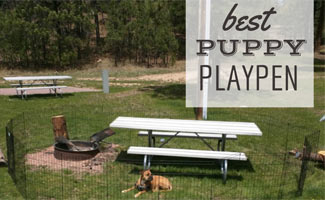 Dog in play pen outside: Best Puppy Playpen