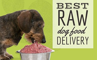 Dog eating raw food out of bowl (caption: Best Raw Dog Food Delivery)