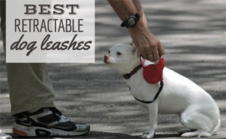 Dog on retractable leash with owner
