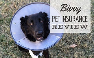 Dog with cone on (caption: Bivvy Pet Insurance Review)