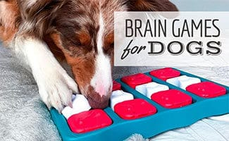 Dog playing with puzzle (caption: Brain Games For Dogs)