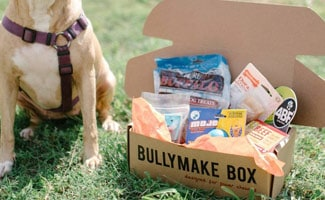 Bullymake Box with dog