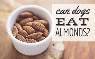 Dish of plain almonds (caption: Can Dogs Eat Almonds)