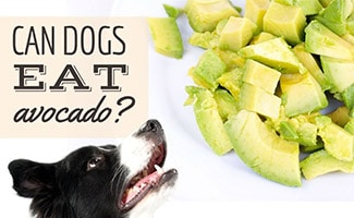 Dog with plate of sliced Avocado (caption: Can Dogs Eat Avocado?)