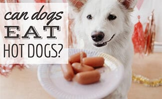 Dog next to plate of mini hot dogs (Caption: Can Dogs Eat Hot Dogs?)