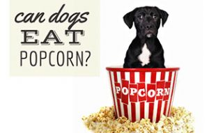 Dog with box of popcorn (caption: Can Dogs Eat Popcorn?)