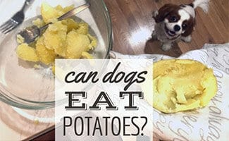 Dog in kitchen cooking potatoes (Caption: Can Dogs Eat Potatoes?)