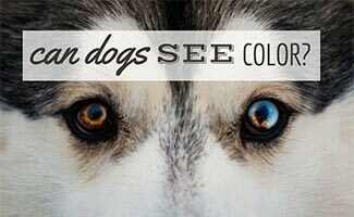Close up of dog's colored eyes (Caption: Can Dogs See Color?)