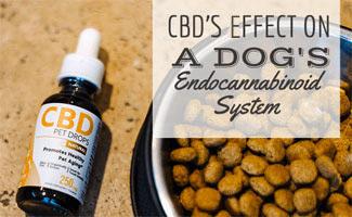 CBD bottle next to bowl of dog food (caption: CBD's Effect On A Dog's Endocannabinoid System)