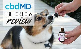 Dog with cbdMD oil (Caption: cbdMD Reviews)