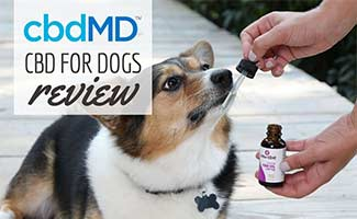 Dog with cbdMD oil (Caption: cbdMD CBD For Dogs Review)